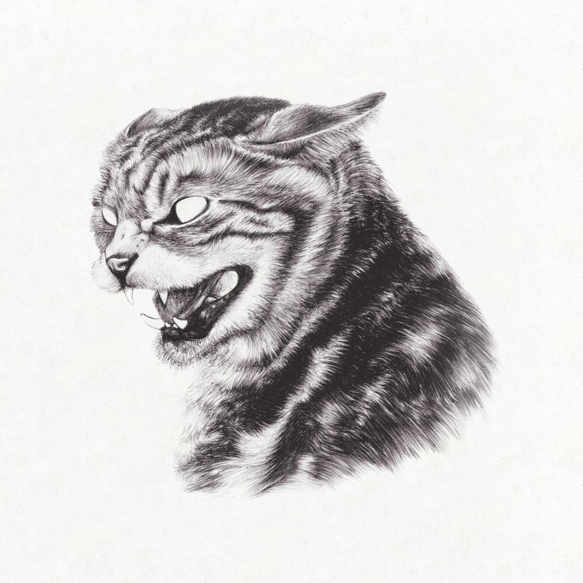 cats swinger club boschwanza